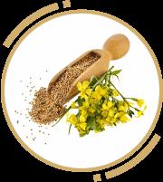 3 zah mustard oil