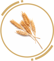 6 zah wheat germ oil